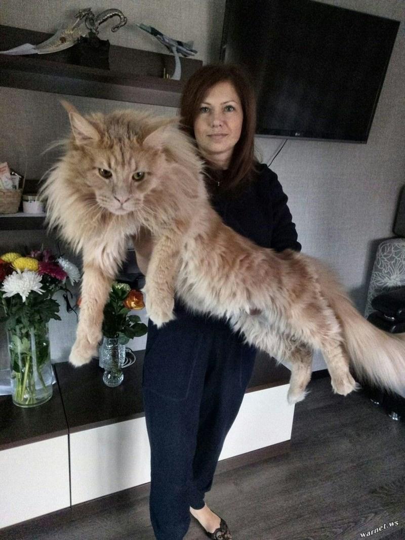 Cat - warnet.ws