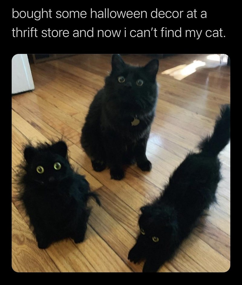 bought some halloween decor at a thrift store and now i can't find my cat. real black cat with round yellow eyes surrounded by identical stuffed cat toys