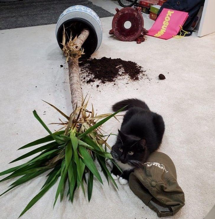 Plant - KOSUM