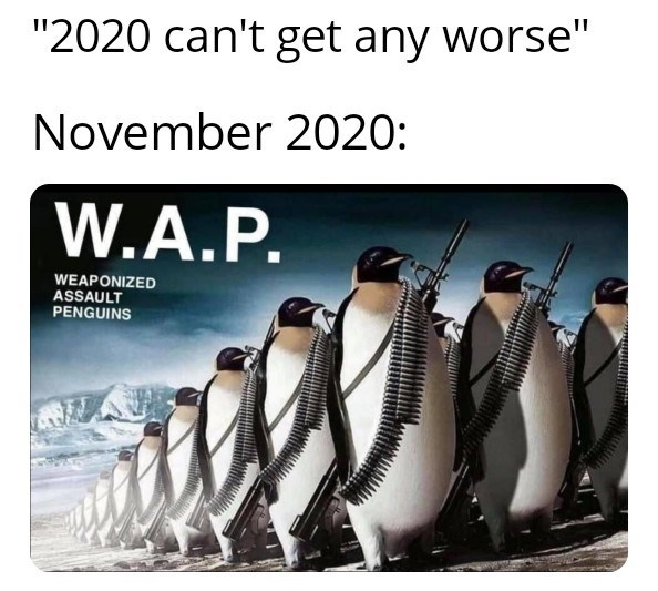 """Penguin - """"2020 can't get any worse"""" November 2020: W.A.P. WEAPONIZED ASSAULT PENGUINS"""
