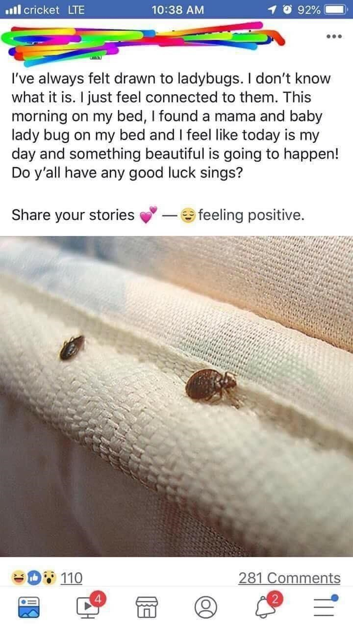 Text - ill cricket LTE 10:38 AM 92% ... I've always felt drawn to ladybugs. I don't know what it is. I just feel connected to them. This morning on my bed, I found a mama and baby lady bug on my bed and I feel like today is my day and something beautiful is going to happen! Do y'all have any good luck sings? Share your stories e feeling positive. D 110 281 Comments