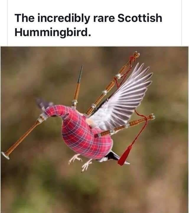 Bird - The incredibly rare Scottish Hummingbird.