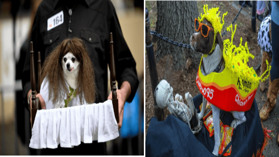halloween costumes dogs halloween funny dogs - 9566725