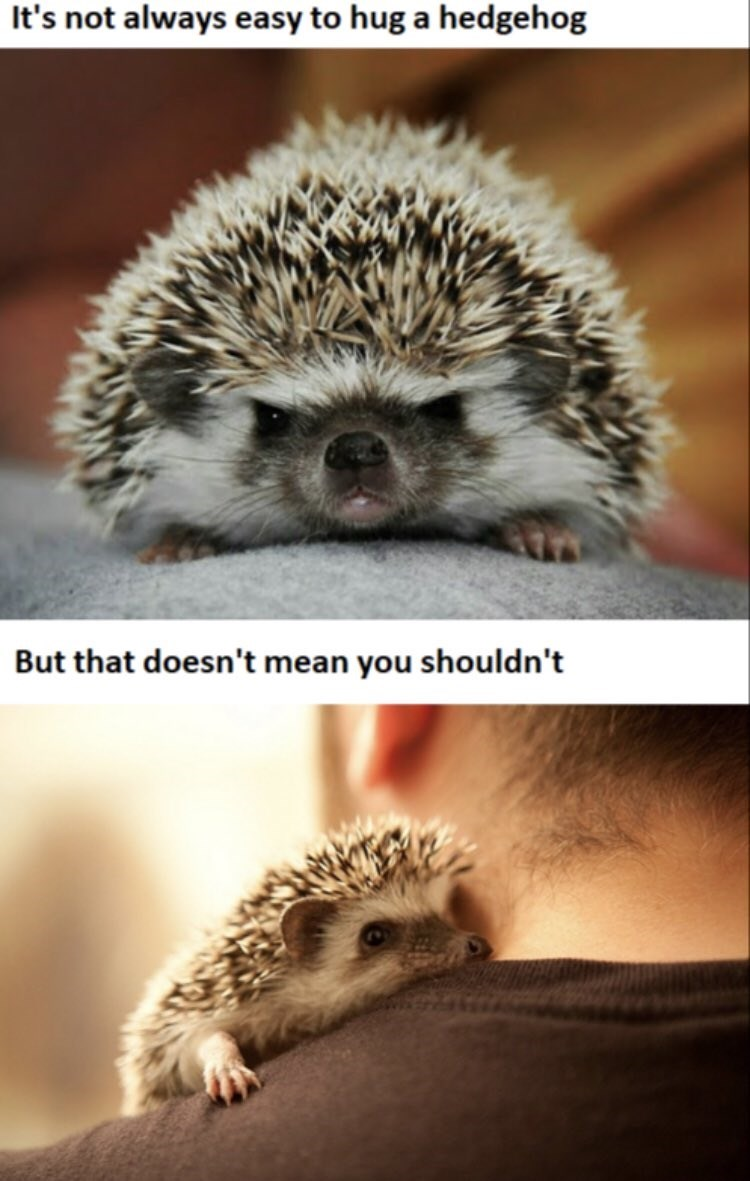 It's not always easy to hug a hedgehog But that doesn't mean you shouldn't