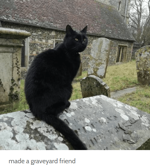 Cat - made a graveyard friend