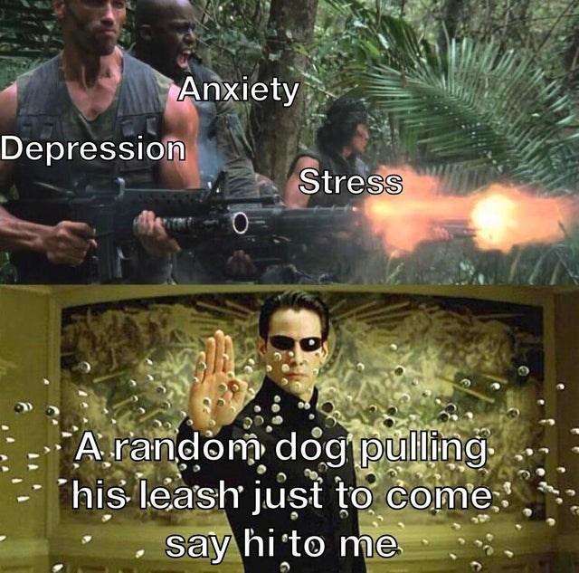 Photo caption - Anxiety Depression Stress A random dog pulling his leash just to come. say hi to me