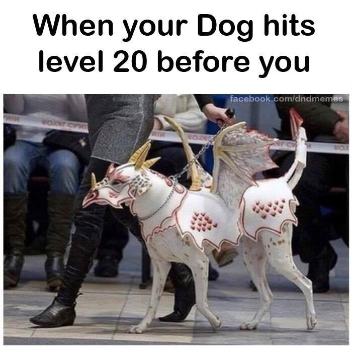 Dog - When your Dog hits level 20 before you facebook.com/dndmemes WON TICCX
