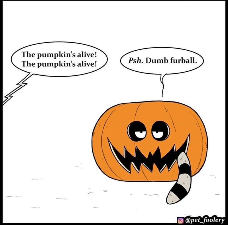 Cartoon - The pumpkin's alive! The pumpkin's alive! Psh. Dumb furball. @pet_foolery