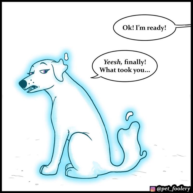 Cartoon - Ok! I'm ready! Yeesh, finally! What took you... @pet_foolery