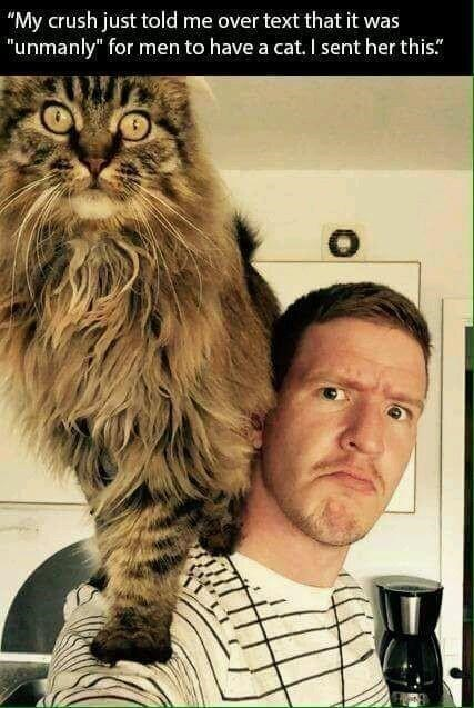 """""""My crush just told me over text that it was """"unmanly"""" for men to have a cat. I sent her this."""" man making a serious face while a huge fluffy cat sits on his shoulder"""