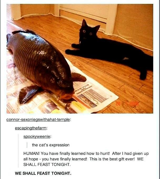 connor-sexonlegswithahat-temple: escapingthefarm: spookyweenie: the cat's expression HUMAN! You have finally learned how to hunt! After I had given up all hope - you have finally learned! This is the best gift ever! WE SHALL FEAST TONIGHT. WE SHALL FEAST TONIGHT.