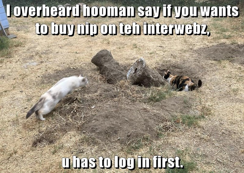 i overheard human say if you want to buy nip on the interwebz you has to log in first two cats digging in the ground around a log