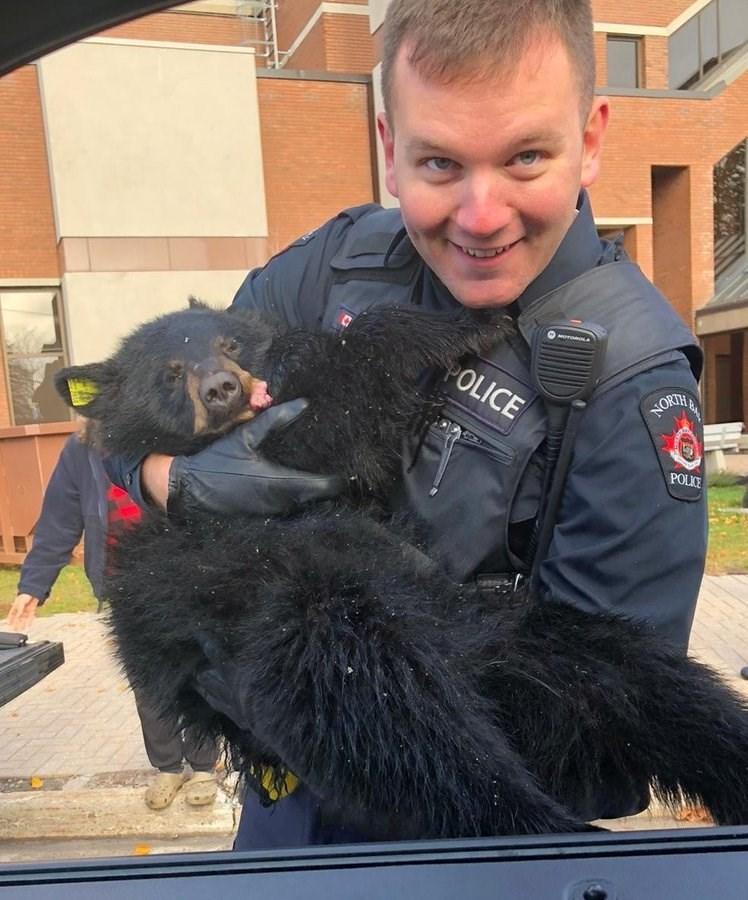 Dog - POLICE NORTH POLICE