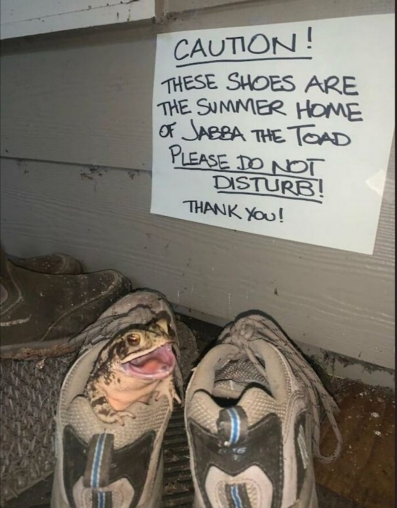 handwritten note that reads caution these shoes are the summer home of jabba the toad please do not disturb thank you and a toad peeking out of a sneaker shoe