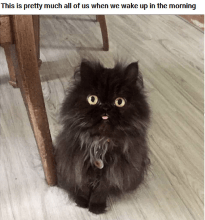 Cat - This is pretty much all of us when we wake up in the morning