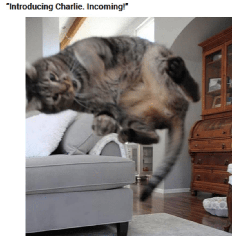 """Cat - """"Introducing Charlie. Incoming!"""""""