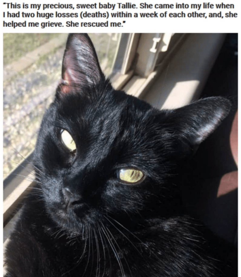 """Cat - """"This is my precious, sweet baby Tallie. She came into my life when I had two huge losses (deaths) within a week of each other, and, she helped me grieve. She rescued me."""""""