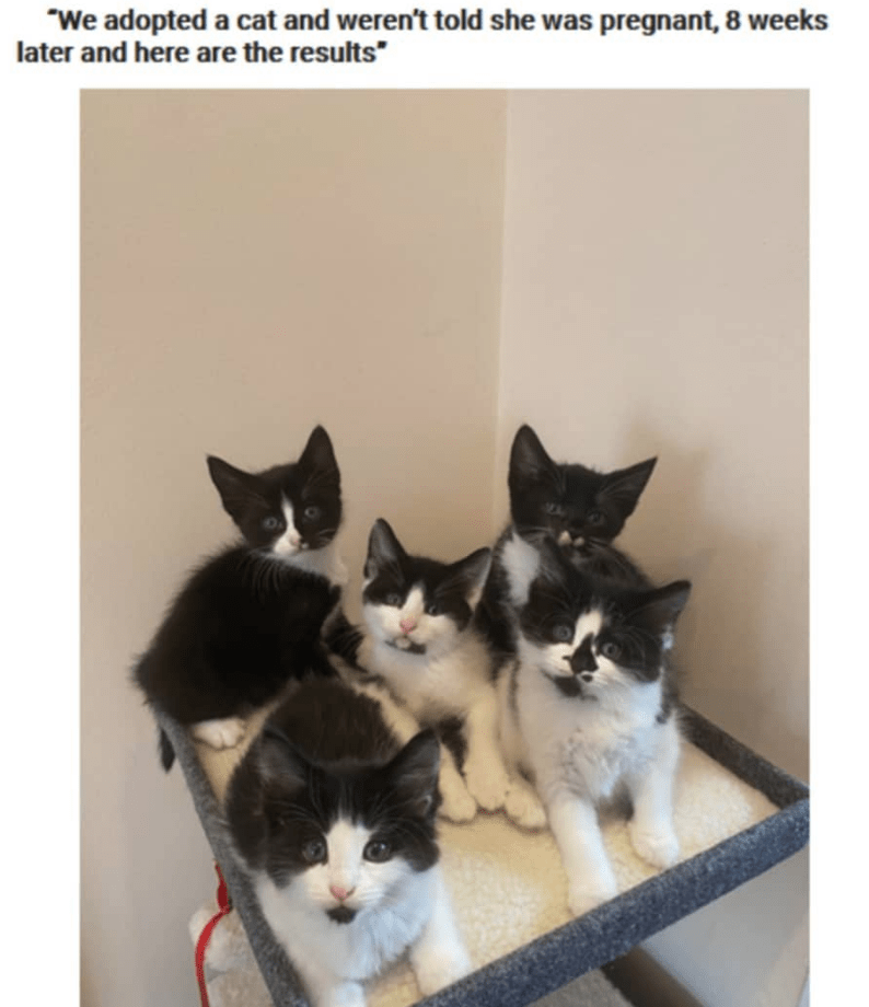 """Cat - """"We adopted a cat and weren't told she was pregnant, 8 weeks later and here are the results"""""""