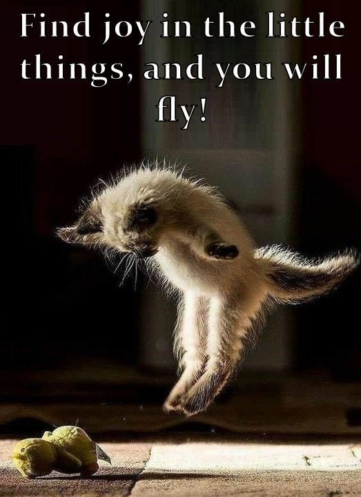 Photo caption - Find joy in the little things, and you will fly!