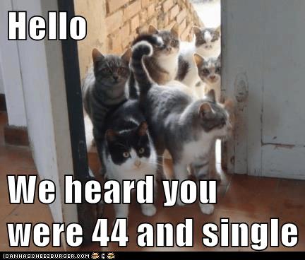Photo caption - Hello We heard you were 44 and single ICANHASCHEEZBURGER.COM: