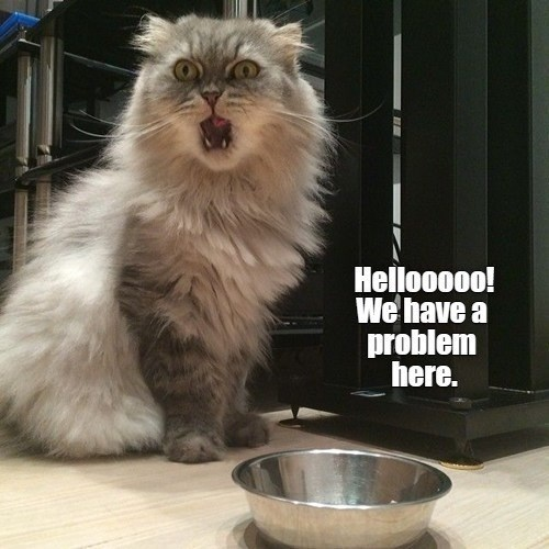 Cat - Hellooooo! We have a problem here.