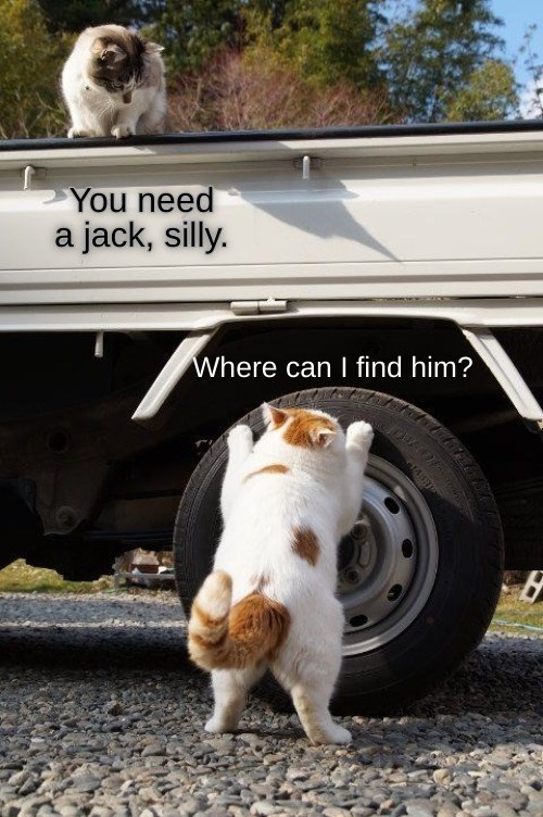 Cat - You need a jack, silly. Where can I find him?