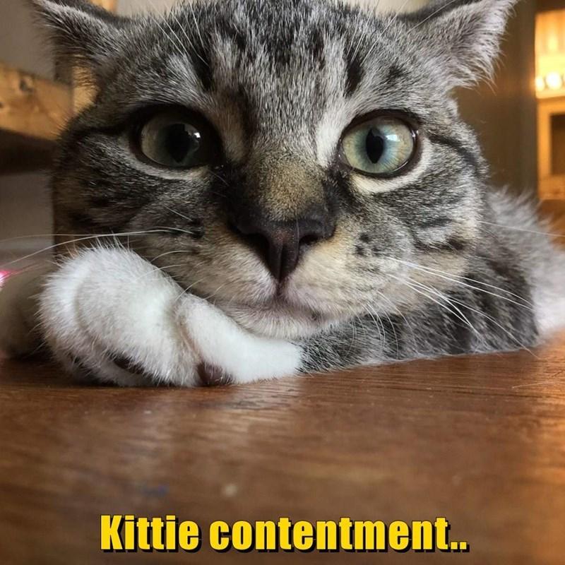 Cat - Kittie contentment.