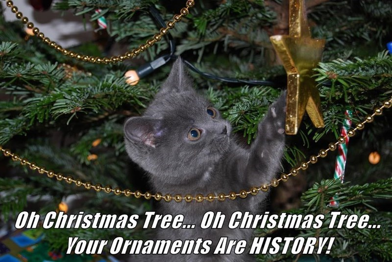 Cat - Oh Christmas Tree.. Oh Christmas Tree. Vour Ornaments Are HISTORV!