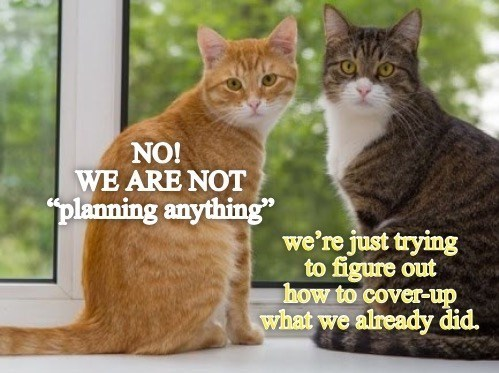 """Cat - NO! WE ARE NOT planning anything"""" we're just trying to figure out how to cover-up what we already did."""