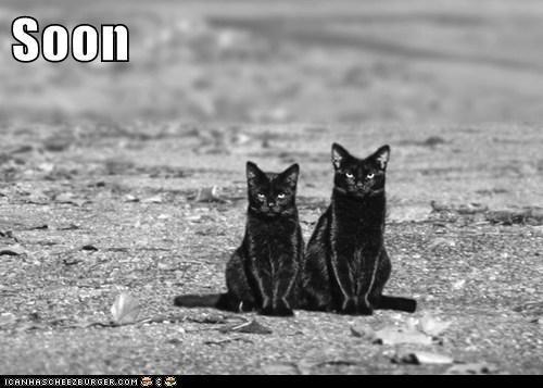 Cat - Soon ICANHASCHEEZBURGER.COM