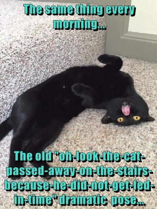 Cat - The same tilng every morning. The oldoh lok-lhe-cat- passed-away-on-lhe stairs- because he did not-get-fed- n-ime dramatic pose.