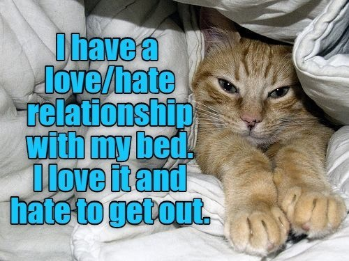 Cat - Ihavea love/hate relationship with my bed. Dlove itand hate to getout.