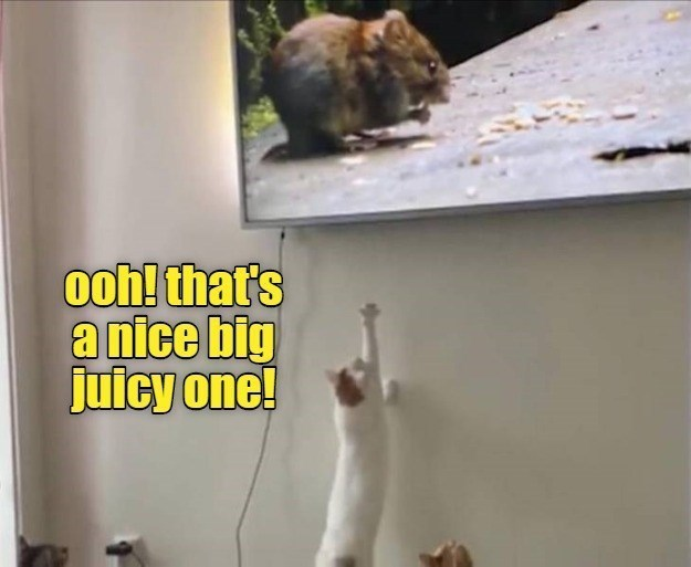 Rat - ooh! that's a nice big juicy one!