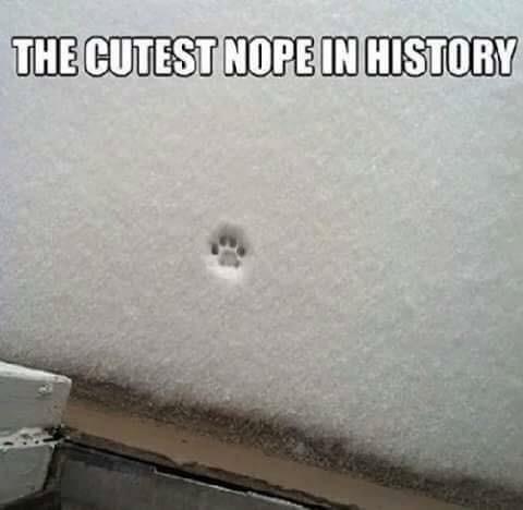 Vehicle door - THE CUTEST NOPE IN HISTORY