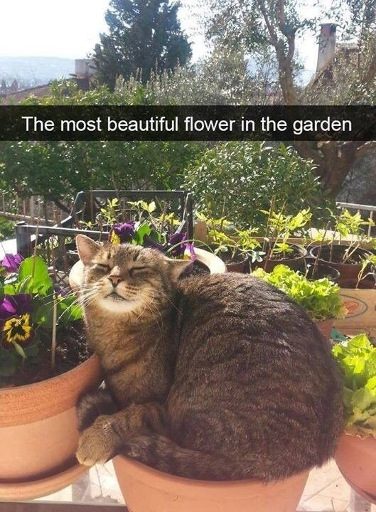 The most beautiful flower in the garden snapchat of a cute cat sitting in a flower pot in the sun