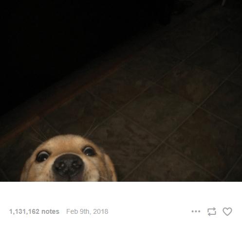 Dog - 1,131,162 notes Feb 9th, 2018 ...