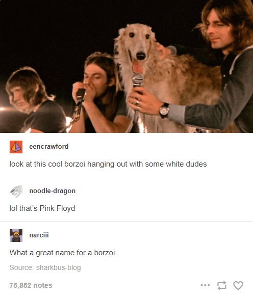 Dog breed - eencrawford look at this cool borzoi hanging out with some white dudes noodle-dragon lol that's Pink Floyd narciii What a great name for a borzoi. Source: sharkbus-blog 75,852 notes