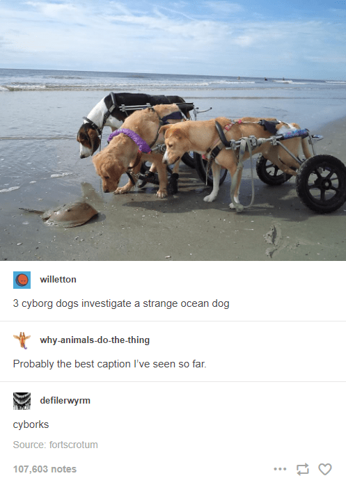 Vehicle - willetton 3 cyborg dogs investigate a strange ocean dog why-animals-do-the-thing Probably the best caption I've seen so far. defilerwyrm сyborks Source: fortscrotum 107,603 notes ...