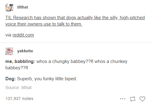 Text - tilthat TIL Research has shown that dogs actually like the silly, high-pitched voice their owners use to talk to them. via reddit.com yakkette me, babbling: whos a chungky babbey??!! whos a chunkey babbey??!! Dog: Superb, you funky little biped. Source: tilthat 137,937 notes ...