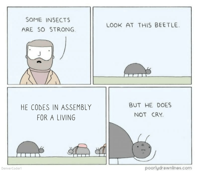 Text - SOME INSECTS LOOK AT THIS BEETLE. ARE SO STRONG. HE CODES IN ASSEMBLY BUT HE DOES NOT CRY. FOR A LIVING DenverCoder poorlydrawnlines.com
