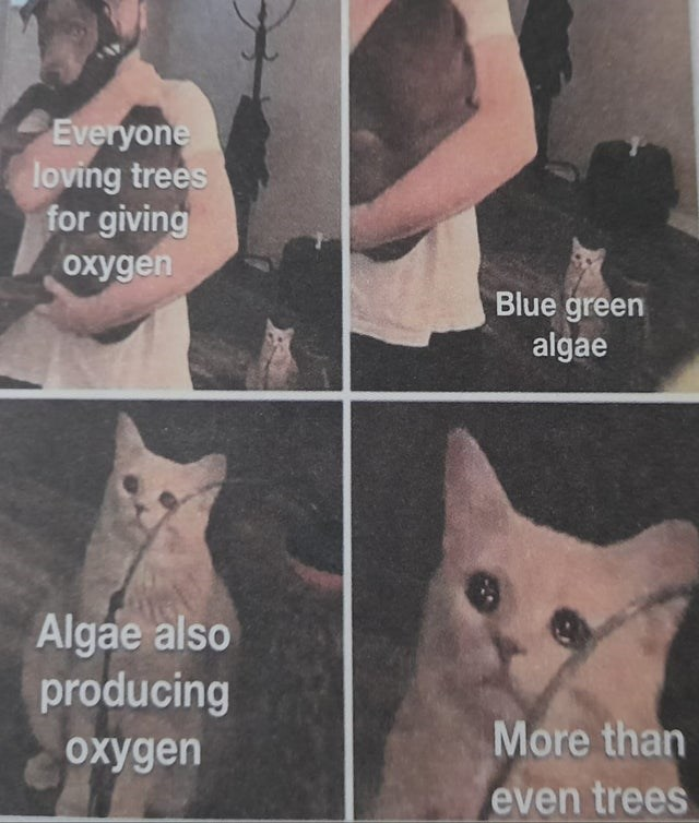 Cat - Everyone loving trees for giving oxygen Blue green algae Algae also producing oxygen More than even trees