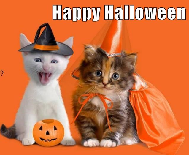 Happy Halloween two cute cats kittens dressed in costumes witch wizard hat