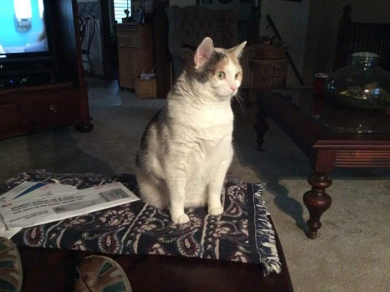 Cat - www s