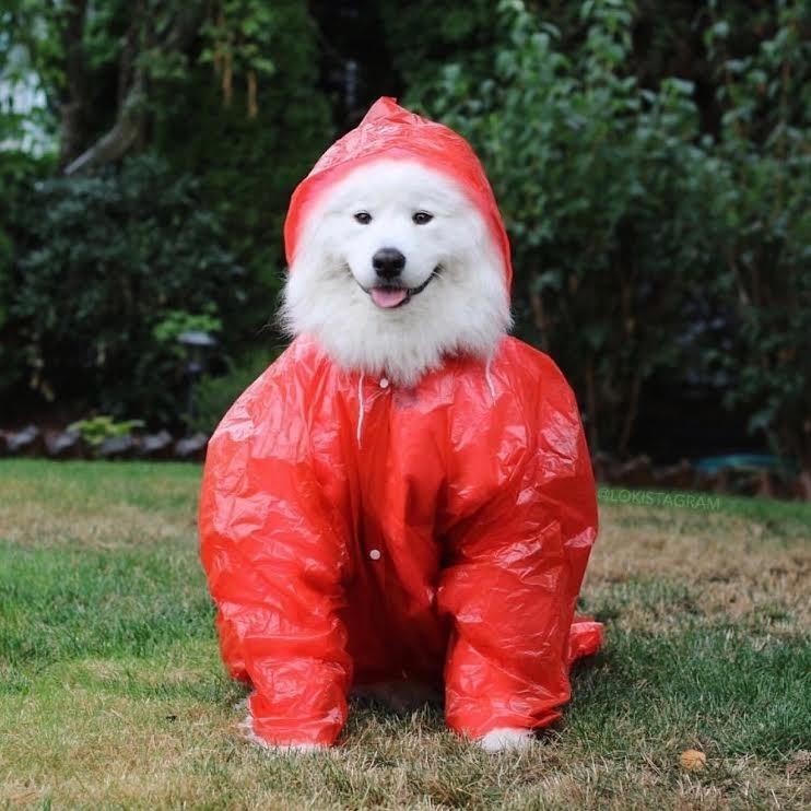 Dog - GLOKISTAGRAM