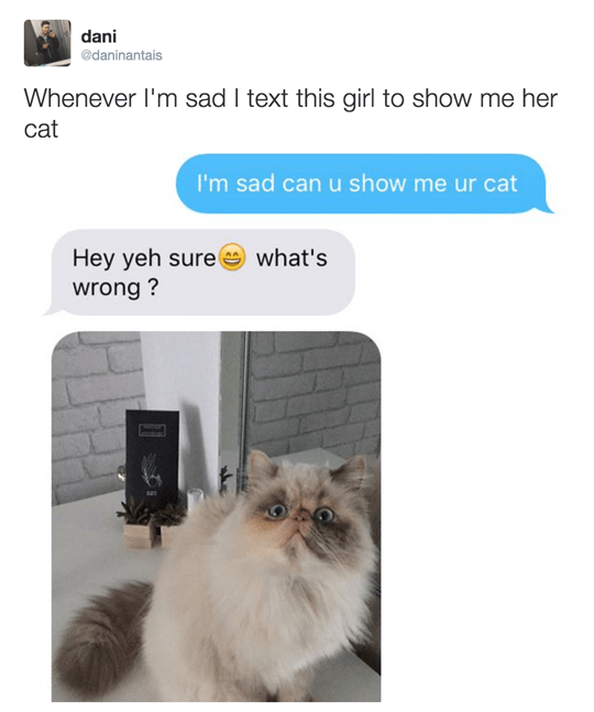 dani adaninantais Whenever I'm sad I text this girl to show me her cat I'm sad can u show me ur cat Hey yeh sure wrong ? what's