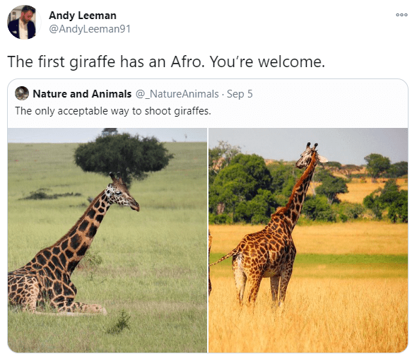 Giraffe - Andy Leeman @AndyLeeman91 000 The first giraffe has an Afro. You're welcome. O Nature and Animals @_NatureAnimals Sep 5 The only acceptable way to shoot giraffes.