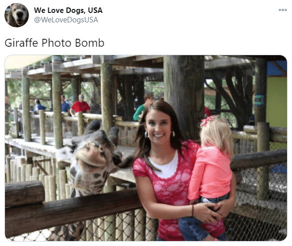 Zoo - We Love Dogs, USA @WeLoveDogsUSA 000 Giraffe Photo Bomb