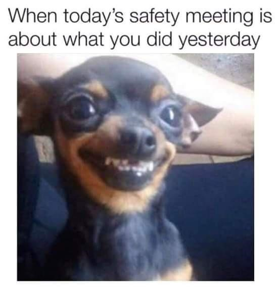 Dog - When today's safety meeting is about what you did yesterday
