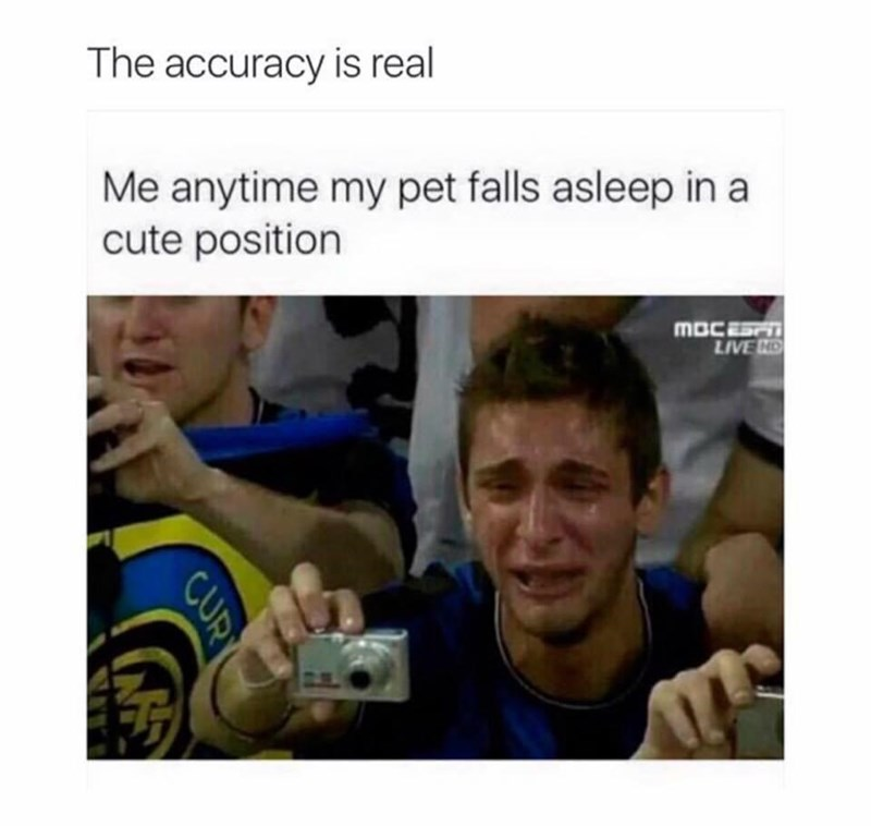 Facial expression - The accuracy is real Me anytime my pet falls asleep in a cute position MBCEST LIVE ND CUR