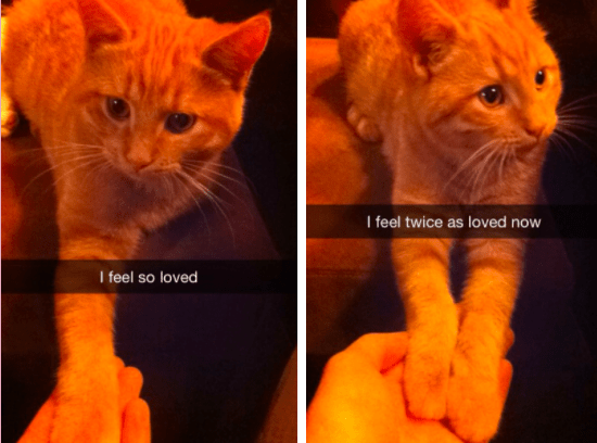 I feel so loved I feel twice as loved now snapchats of a cute ginger cat putting one paw then both paws on top of a human's hand